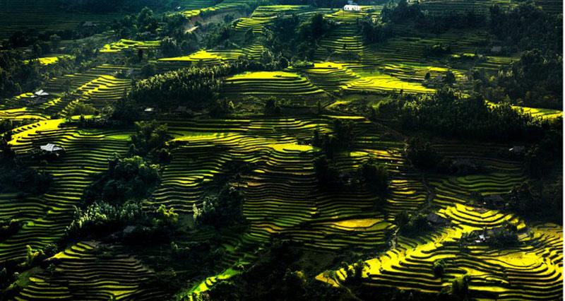 Ruộng bậc thang ở Hoàng Su Phì có đặc trưng là rất cao và xen lẫn cánh rừng vàng.