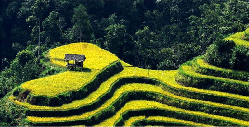 Người nông dân đã biến mình thành nghệ sĩ khi tạo nên một trái tim giữa núi rừng.