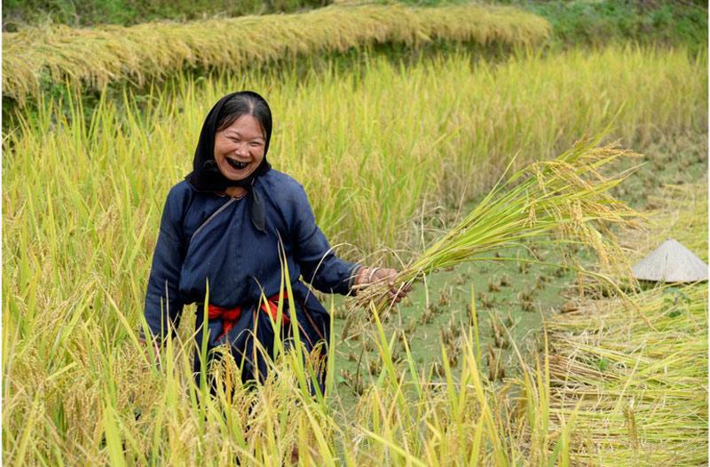 Niềm vui được mùa của người dân xã Nậm Ty.