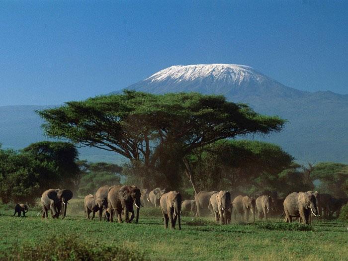 Vườn quốc gia núi Kenya là nơi sinh trưởng của vô số loài động vật hoang dã