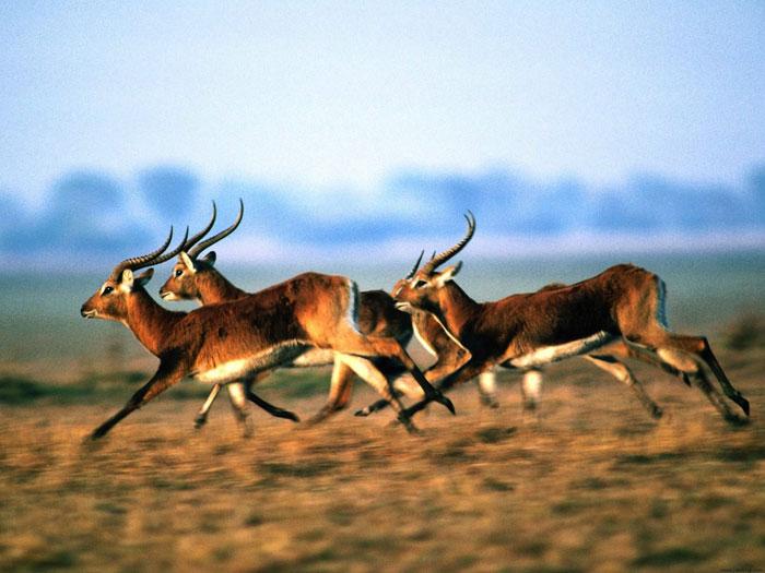 Quá trình tiến hóa và phát triển của hệ sinh thái cũng như hệ động thực vật tại vườn quốc gia núi Kenya là ví dụ nổi bật cho quá trình thay đổi để thích nghi với môi trường của các loài động vật, thực vật trong hàng triệu năm.