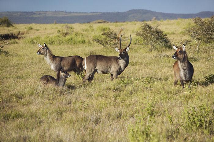 Unesco đã công nhận Vườn quốc gia núi Kenya của Kenya là Di sản Thiên nhiên thế giới năm 1997.