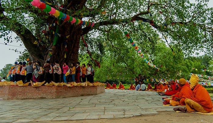Cây bồ đề và ao Puskarini, nơi hoàng hậu Mayadevi làm lễ nhúng nước trước khi sinh Đức Phật