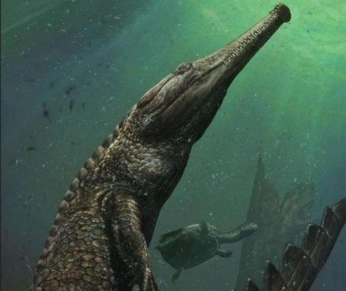 Machimosaurus rex là loài cá sấu sống dưới biển lớn nhất từ trước tới nay.