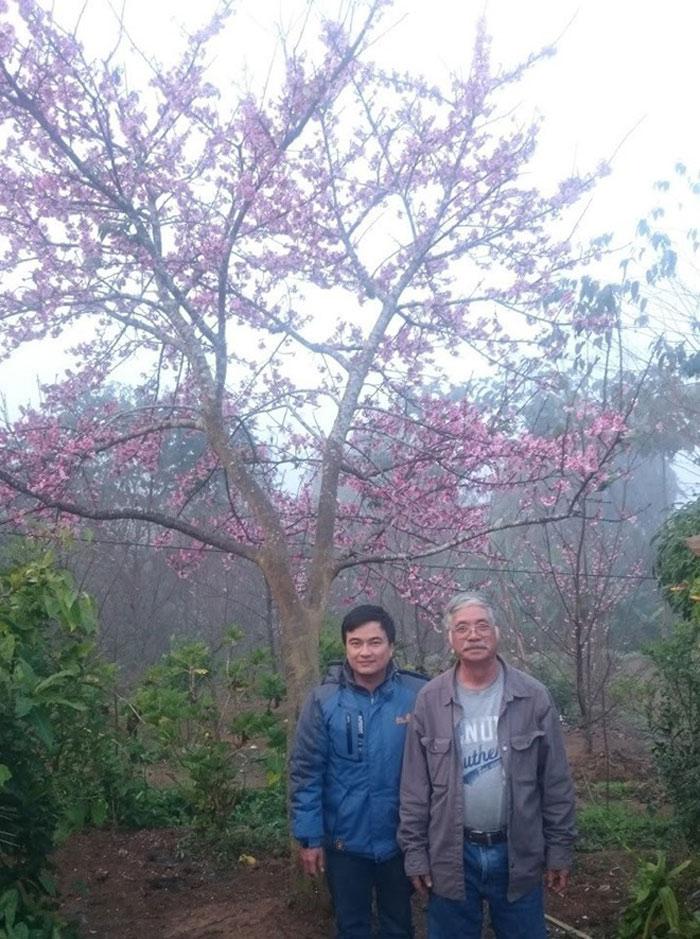 Ông Trần Lệ (phải) và du khách trước một cây anh đào Nhật Bản.