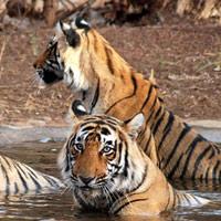 Khu bảo tồn Sundarbans