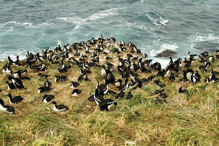 Các hòn đảo nằm gần Nam Cực của New Zealand gồm 5 nhóm đảo và quần đảo hầu hết nằm ở gần phía phía đông nam của lục địa ngầm dưới đáy biển New Zealand