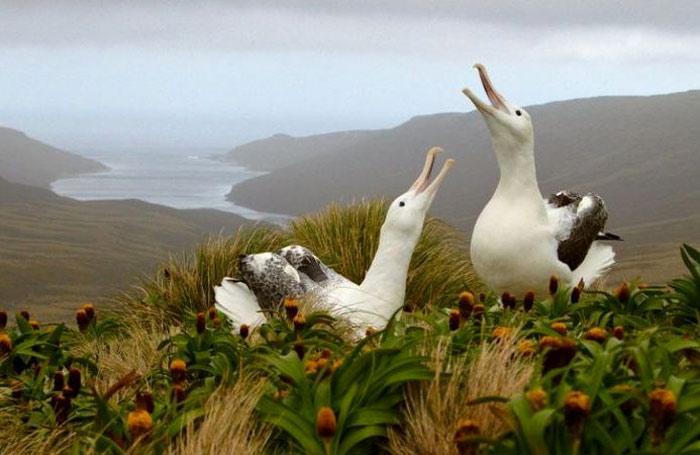 Quần đảo Snares đến nay vẫn là một trong những nơi hoang sơ nhất ở New Zealand.