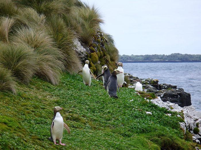 Quần đảo Antipodes vốn là đảo núi lửa khắc nghiệt nhất tại vùng biển gần Nam Cực.