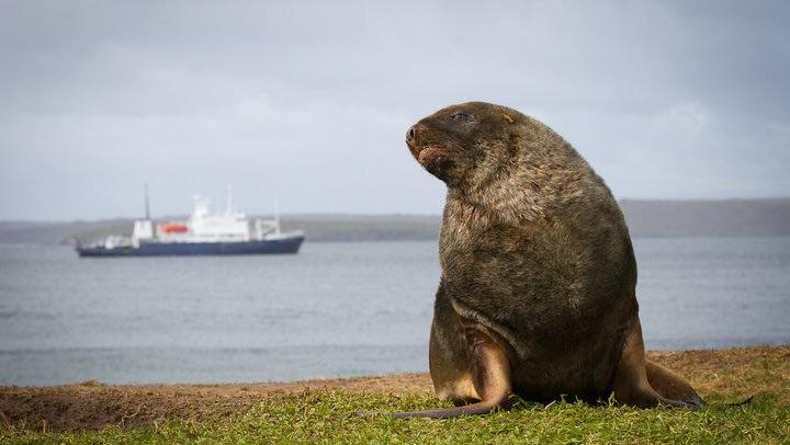 Trong suốt thế kỷ 19 hòn đảo này là nơi săn bắn động vật chân màng nổi tiếng