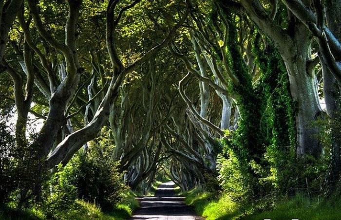 Hàng rào Trung cổ ở Bắc Ireland được cho là đã 300 tuổi đời.