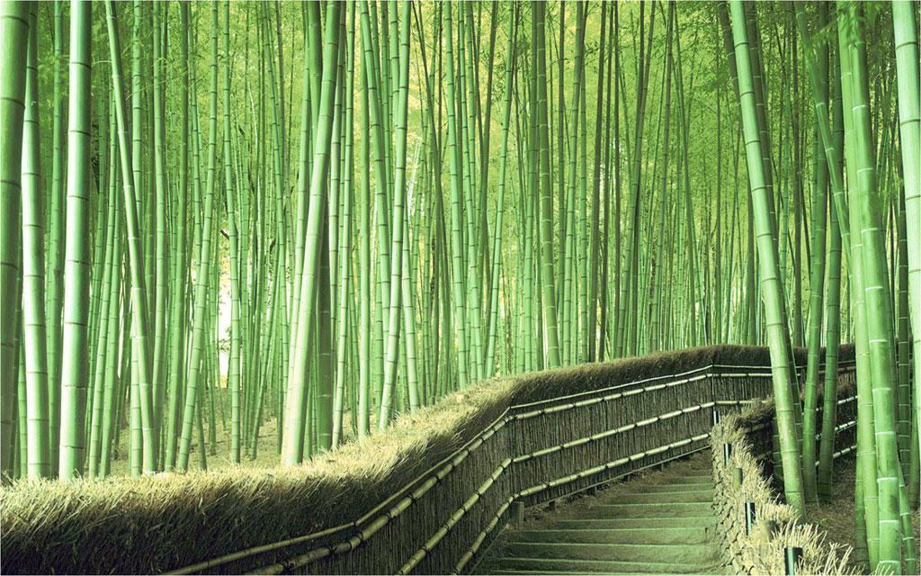 Những hàng rào dọc theo con đường được làm từ chính những nhánh và thân cây trúc bị đổ.