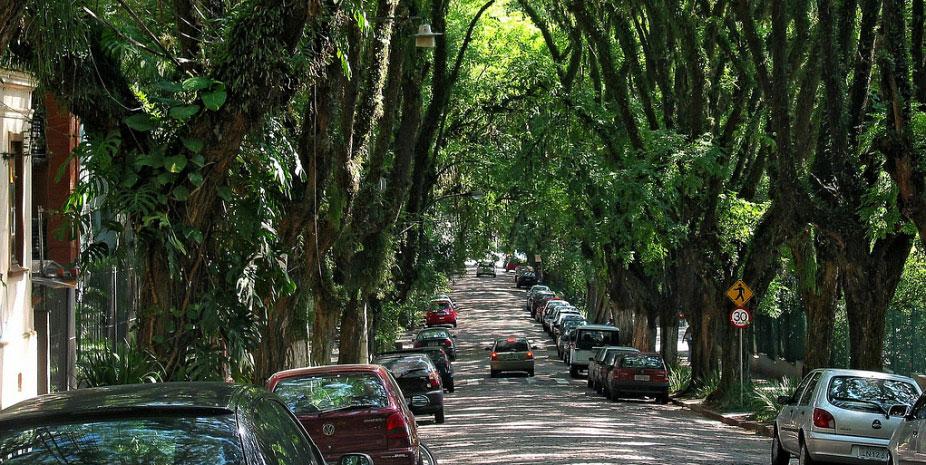 Đường Goncalo de Carvalho ở Brazil được coi đẹp nhất thế giới