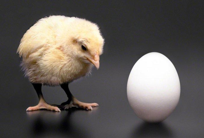 Câu hỏi muôn đời về gà - trứng giờ đã có câu trả lời.