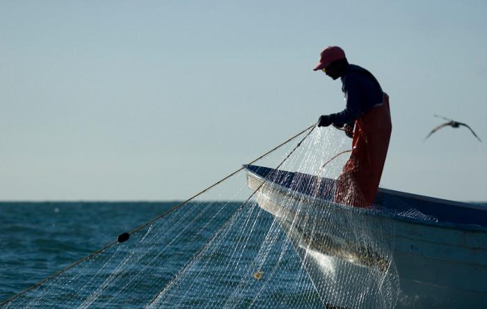 Đánh bắt cá bằng lưới rê làm chết nhiều vaquita.