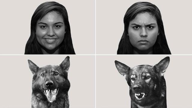 Những chú chó luôn có một sự tập trung nhất định mỗi khi âm thanh chúng nghe được có mô tả cảm xúc khớp với tấm hình chúng đang theo dõi.