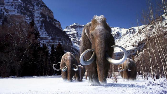 Voi ma mút là sinh vật từng tồn tại trên Trái đất ở kỷ băng hà trước.
