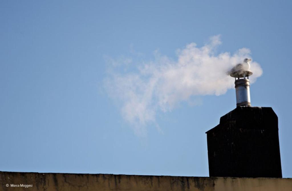 """Tác phẩm """"Sưởi ấm"""". Con chim mòng biển đang nghỉ ngơi trên một ống khói tòa nhà trong mùa đông lạnh giá ở Genoa (Italy)."""