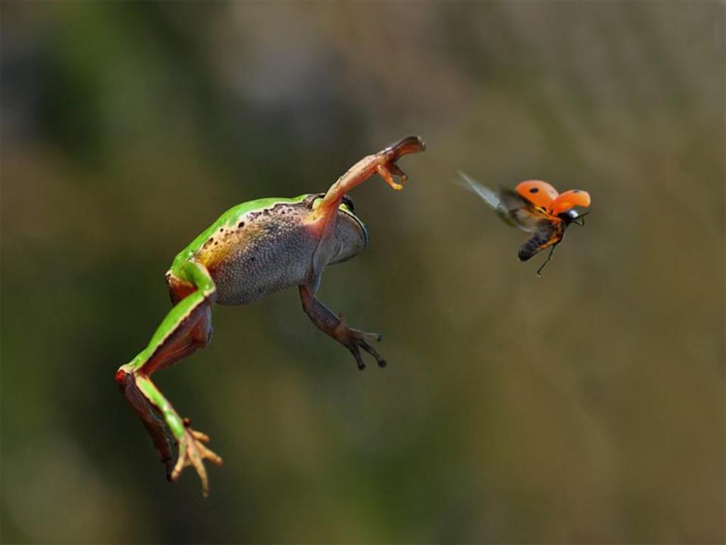Tớ cũng muốn bay! Đợi tớ với!