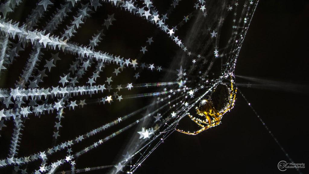 Chú nhện như đang phát sáng giữa một rừng sao lung linh