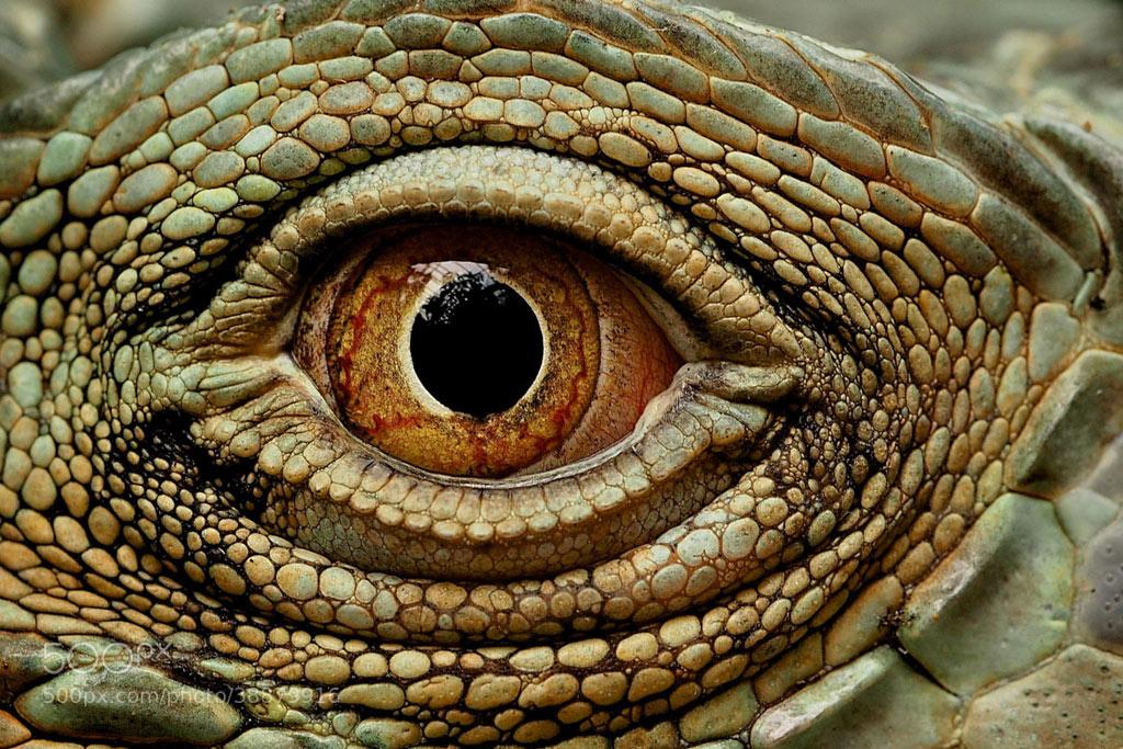 Các bạn có biết đây là ánh mắt của con gì không?