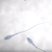 Robot tăng tốc độ bơi của tinh trùng, giảm tỷ lệ hiếm muộn