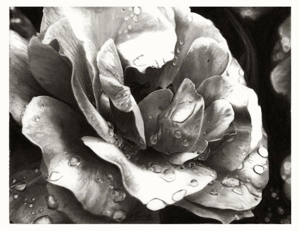 Họa sĩ người Hungary Myhályi Anita đã tạo ra bức tranh bông hồng ướt đẫm sương đêm này.