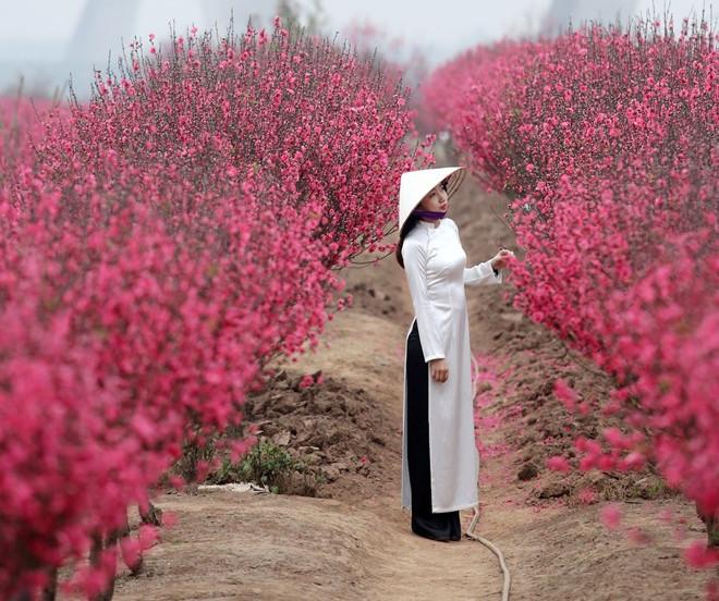 Hoa đào có màu đỏ hồng rực rỡ.