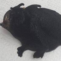 Quái ngư hai chân mình đen sì ở New Zealand