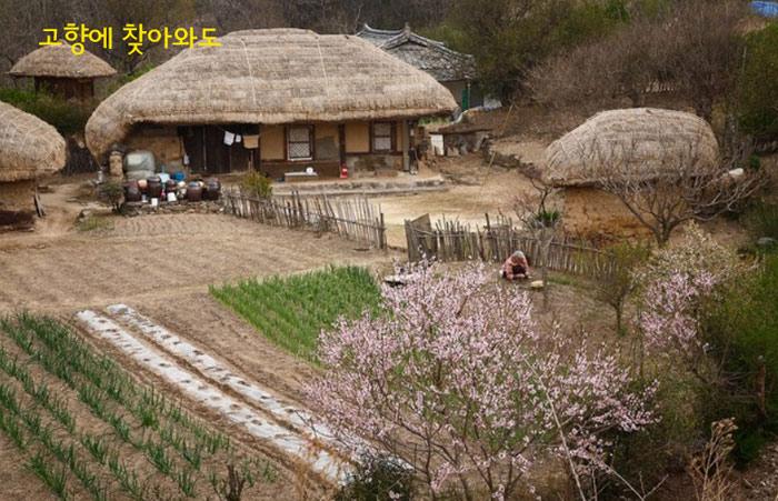 Làng Wolseong Yangdong là ngôi làng có khoảng 150 ngôi nhà tranh lợp mái lá truyền thống