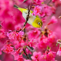 Những cánh chim mùa xuân