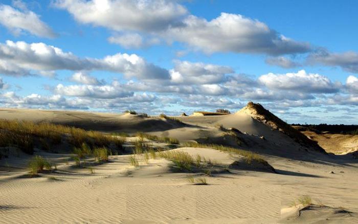Mũi đất Kursh là cồn cát cao nhất tại Châu Âu