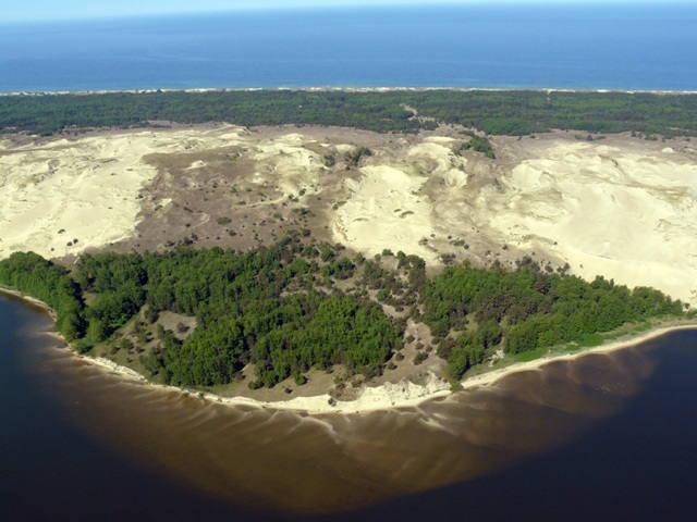 Khu vực mũi đất Kursh có hệ động thực vật tương đối phong phú