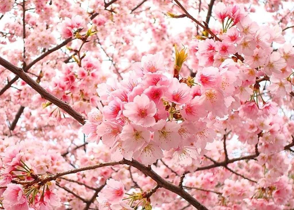 Ở nơi đó, có2 vị thần tên là Trà và Uất Lũy trú ngụ ở trên cây hoa đào khổng lồ này.
