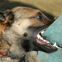 Cách sơ cứu khi bị chó cắn