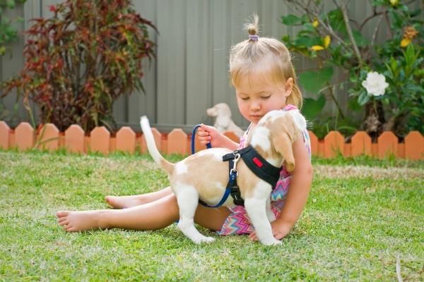 Hạn chế cho trẻ tiếp xúc với chó mèo, nhất là vào màu nắng nóng