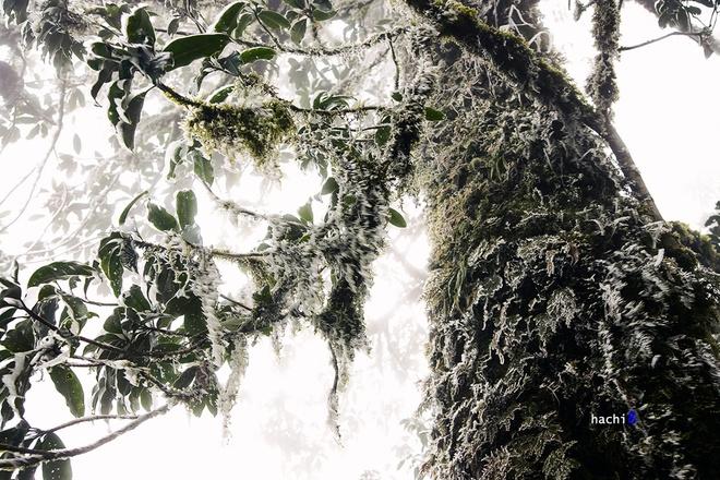 Giá lạnh và gió đã khiến những giọt nước trở thành đám gai sắc nhọn bám đầy cành lá.