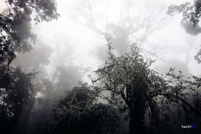 Khu rừng trở nên ma mị hơn với những thân cây cổ thụ trắng thếch vì băng giá.