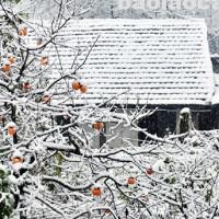 """Vì sao khí hậu ấm lên mà mùa đông lại """"rét kỷ lục""""?"""