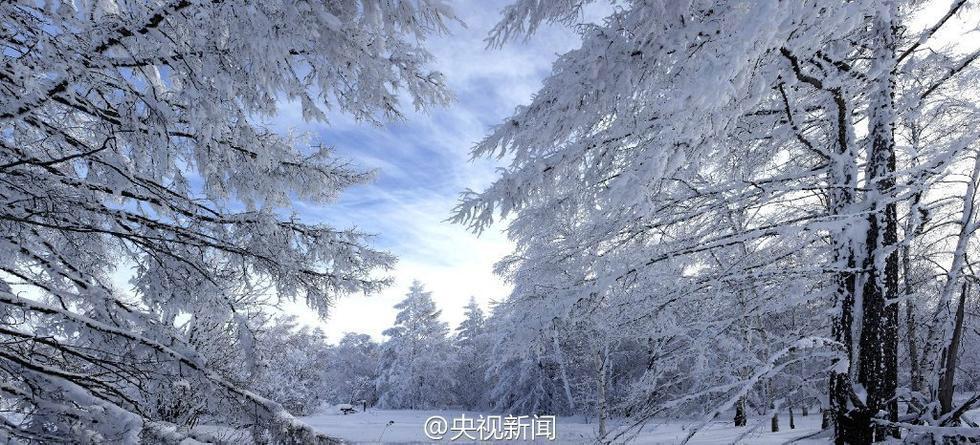 Băng tuyết phủ kín các cành cây, tạo khung cảnh như trong truyện kiếm hiệp.