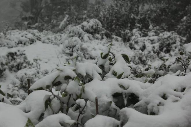 Tại khu vực Na Ngoi có nhiều điểm tuyết đóng dày tới 10 cm, có nơi 20 cm.