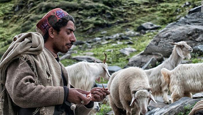 Sanju, một người mà đoàn phóng viên gặp, đi từ Bara Bangal tới vùng ngoại ô Dharamshala để đưa đàn gia súc của anh nghỉ ngơi sau chặng đường vượt đèo Thamsar.