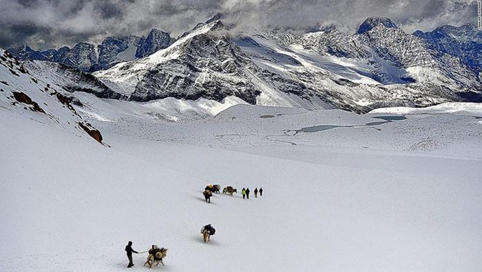 Một nhóm nhỏ người Gaddi đang mở đường cho đoàn cừu di chuyển giữa vùng tuyết phủ dày trắng xóa.