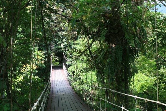 Vườn quốc gia Gunung Mulu là nơi sinh trưởng của hơn 4.000 loài nấm, 1.700 loài rêu, 3.500 loại cây