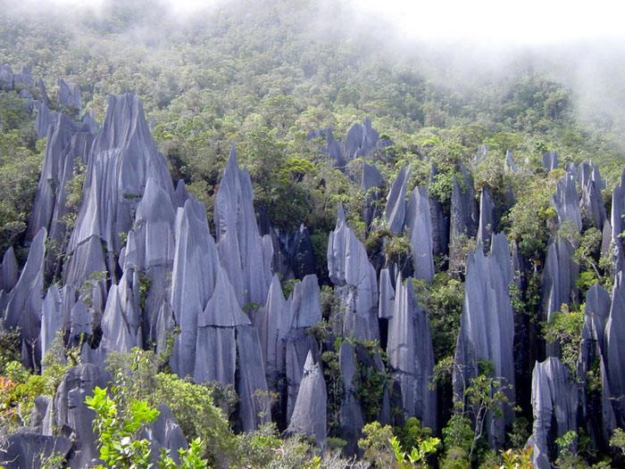 Gunung Mulu có tổng diện tích chừng 52.865 ha rừng nhiệt đới nguyên sinh