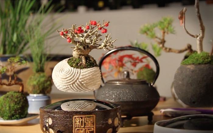 Những cây bonsai của họ có thể bay lơ lửng trong không trung, thậm chí xoay vòng tại chỗ.