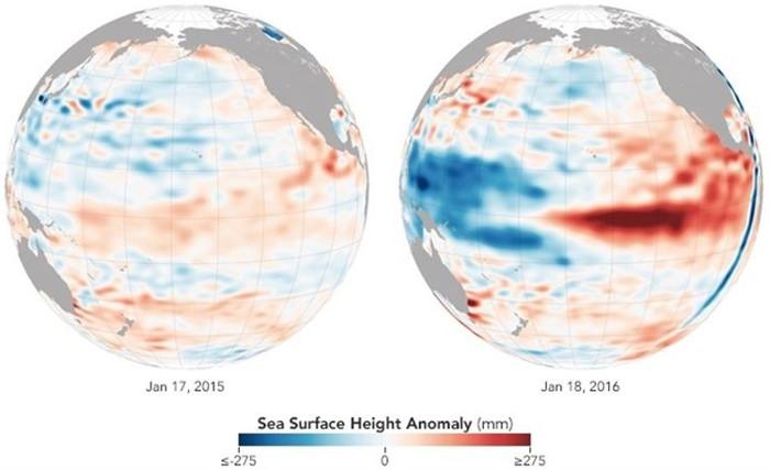 Biểu đồ sự chênh lệch độ cao bất thường của mực nước biển (đơn vị mm) với màu đỏ là cao hơn và màu xanh là thấp đi giữa tháng 1/2015 (trái) và tháng 1/2016 (phải).