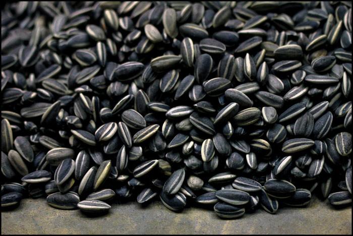 Hạt hướng dương chứa nhiều thành phần độc hại