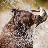Não bộ càng lớn, khả năng phản xạ của động vật ăn thịt càng giỏi