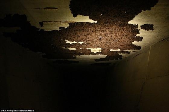 Loại dơi này trốn trong các hang động, đường hầm nhân tạo tại thành phố Kochi - đảo Shikoku (Nhật).